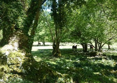 bosque de viango