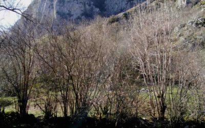 La ruta del Río Casaño