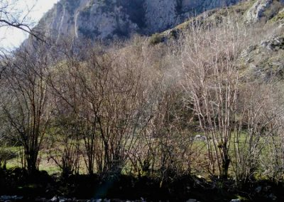 peñas cabraliegas junto al rio Casaño