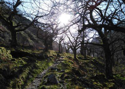 ruta rio casaño. bosque de castaños