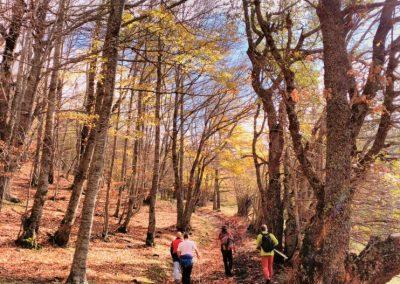 Senderismo en los bosques de Cantabria